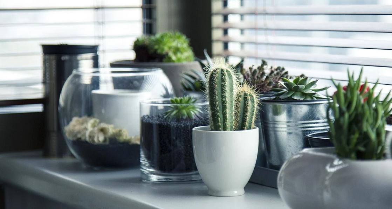 Comment prendre soin de son cactus en pot