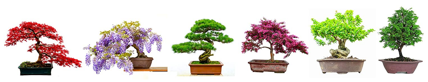 Comparatif pour choisir le meilleur kit de bonsaï prêt à pousser