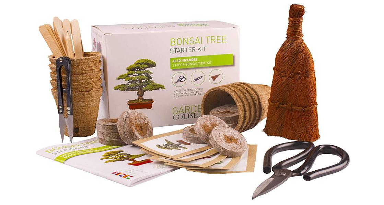 Meilleur kit de bonsaï prêt à pousser