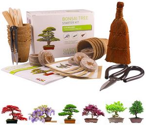 Test et avis sur le kit de bonsaï prêt à pousser Garden Coliseum