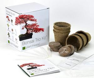 Test et avis sur le kit de bonsaï prêt à pousser Plant Theatre trio Kit
