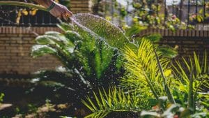 aquaponie est-elle bonne pour les plantes