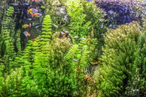 filtration naturelle par les plantes
